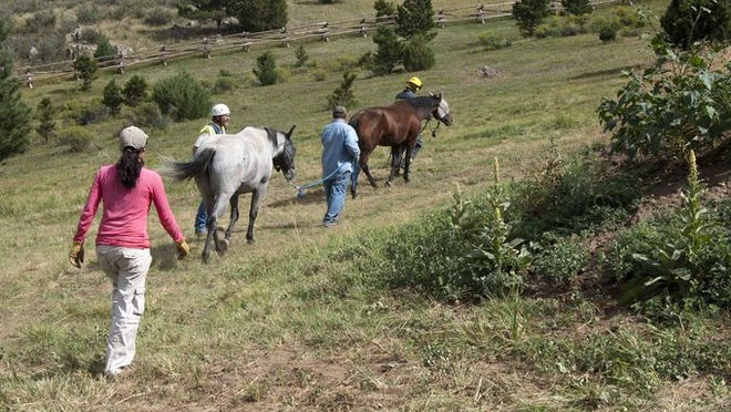 Rescue crews helped three horses get out of a trench near Masonville Wednesday afternoon.