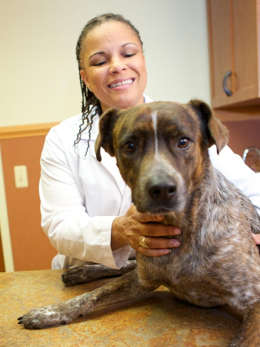 crown veterinary specialists celebrate 5th anniversary