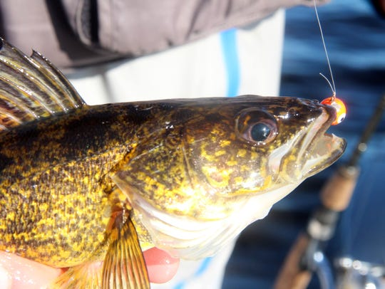 The Wisconsin Department of Natural Resources is proposing a reduction from 5 to 3 in the walleye daily bag limit on the Lake Winnebago system. The proposal will be up for a public vote April 8 at the 2019 spring hearings.