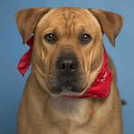 Adoptable animals in the Valley