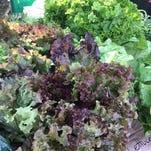 Summer in season at farmers market