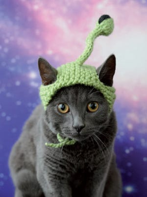 """Extraterrestrial is featured in """"Cats in Hats."""""""