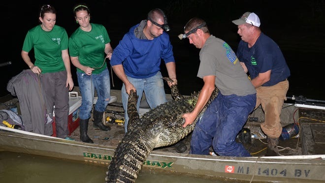 Getting a gator in your boat may be easier if you spend less time scouting before the season.