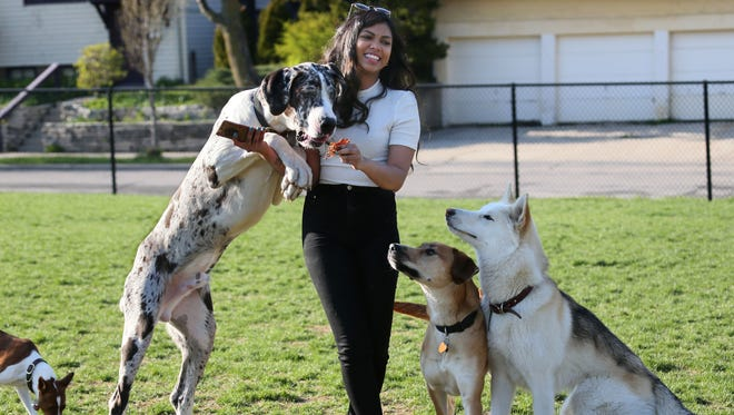 Joanne Raj plays with her Great Dane, Levi, as they take photos at Roverwest Dog Exercise Area for the dog's Instagram account, @thelevi.athan.