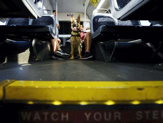 Ian, a seeing eye dog in training, waits as others board the bus at Walmart in West Manchester Township on Tuesday.  Members of the Loving Eyes 4-H Seeing Eye Puppy Club rode the bus from West Manchester Town Center to the York Fair with the seeing eye dogs as part of their training.