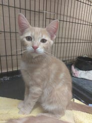 Harley is a 4-month-old female cat who is very active