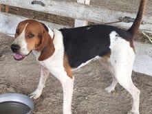 Council holds off on barking dog ordinance vote