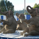 Elephants are back at Lebanon Area Fair