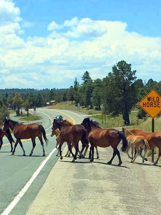 wild horses at crossing