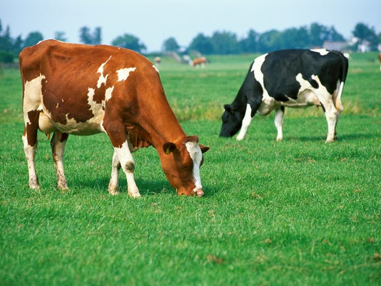 Cows on Pasture ThinkstockPhotos-87341580.jpg