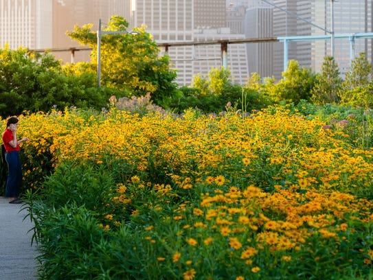 The gardens at Brooklyn Bridge Park show that you don't