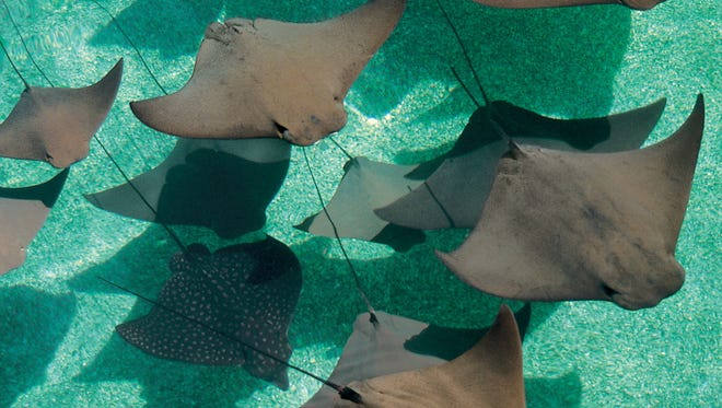 Marine Habitat is the world's largest open-air aquatic facility.