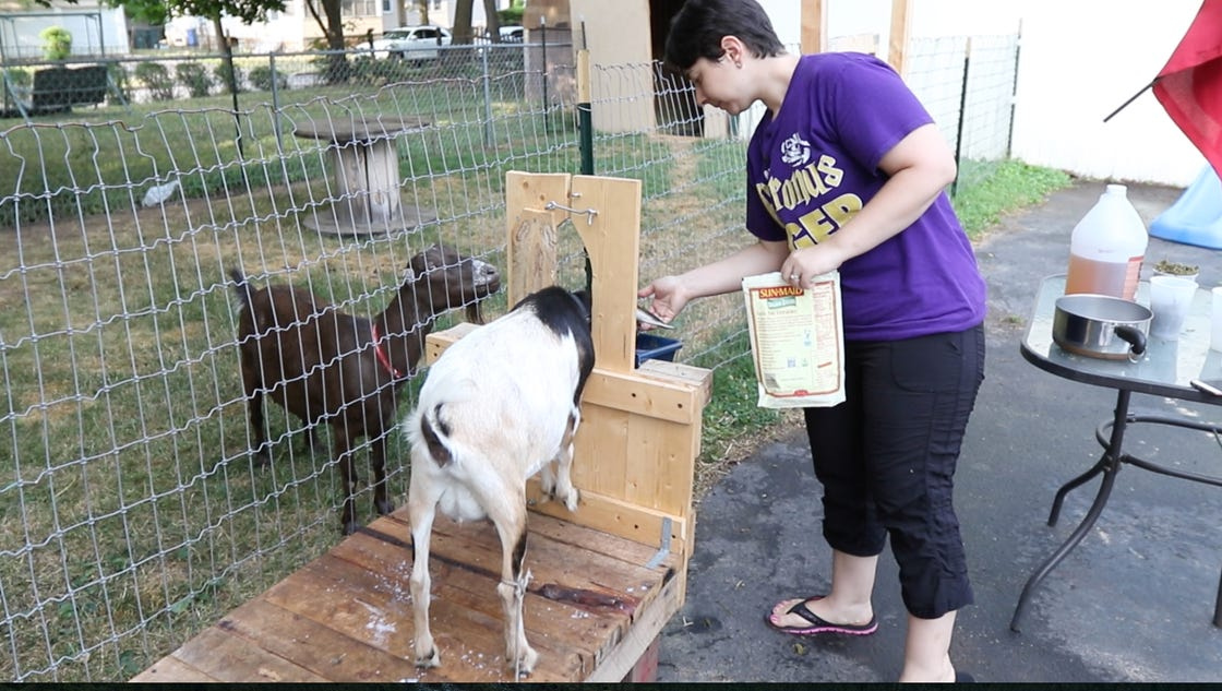 family milks city living with backyard goats