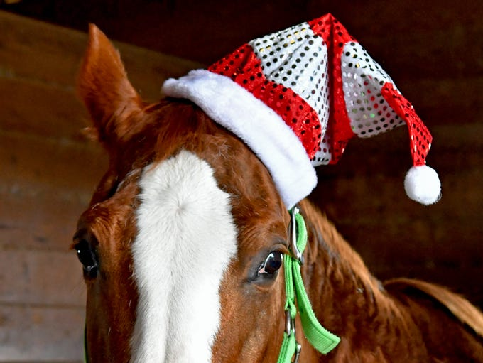Dub, a therapy horse, gets into the Christmas spirit.