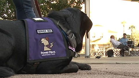 Kristoff, a service dog, was in training with Sparky's Service Dogs.