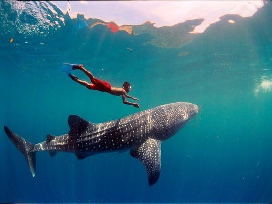Shark at IMAX