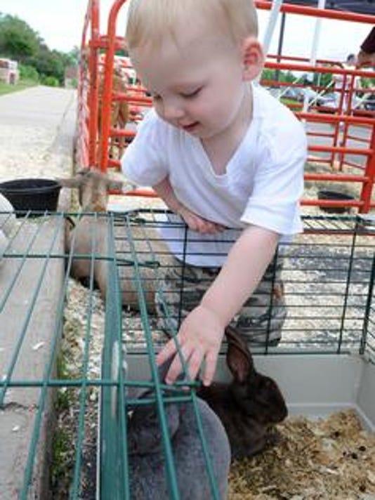 636015174245339458-bunny.jpg
