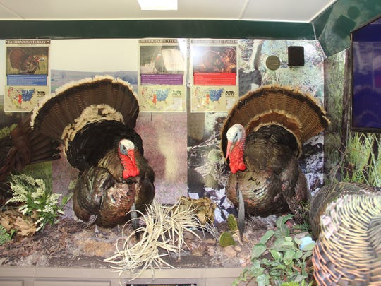 Full-body mounts of six types of wild turkeys as well as educational materials and audio recordings are included in The Traveling Turkeys exhibit.