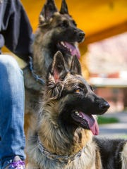 Shasha and Shea are specially trained dogs that went down to Las Vegas after the shooting to help people struggling with PTSD, October 5, 2017.
