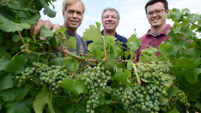 Mike Steedman, Dennis Eckmeyer and Daniel Hopper, shown with grape vines at the UNR vineyard, are part of a group pushing to make it legal to make wine and sell it in Washoe and Clark Counties.