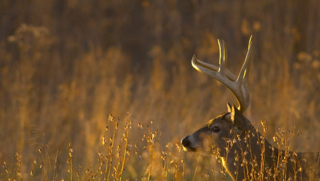 The Texas Parks and Wildlife Department is inviting comment from Texans about proposed changes to hunting regulations for the 2018-19 season. A Facebook live session will be at noon Tuesday, March 6.