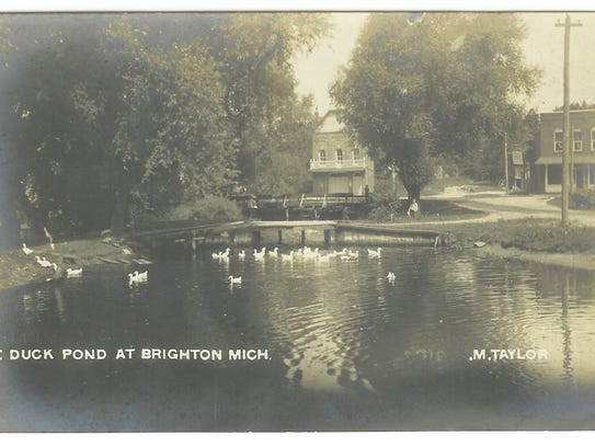 Ducks gather at the Brighton Mill Pond in this historical