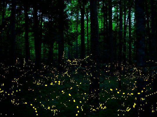 synchronous-fireflies-elkmont-smoky-mountains.jpg