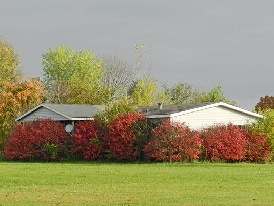 -Overgrown Plantings.jpg_20141107.jpg