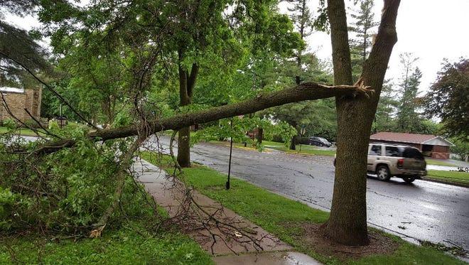 Storm damaged a tree at Oak Street Park in Edgar on June 5, 2016.