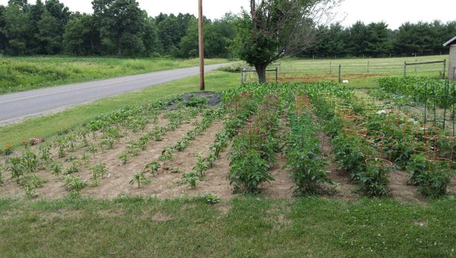 Lovina enjoys growing a variety of vegetables in her large garden.