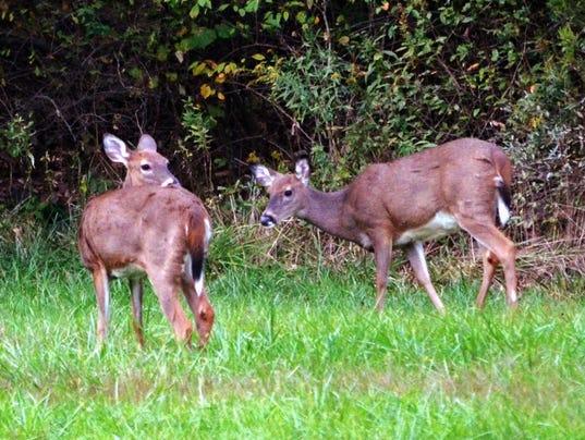 deer-pair.jpg