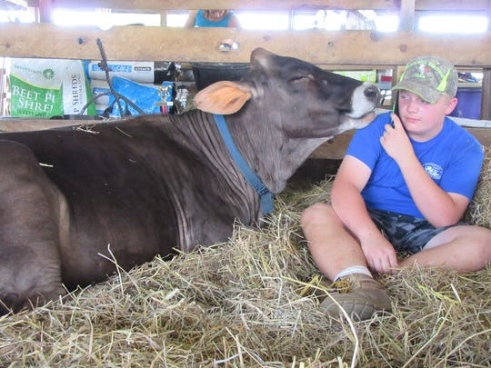 Young showman takes a call while relaxing with his cow at the 2017 Hunterdon County 4-H and Agricultural Fair. The 2019 Fair runs from Aug. 21 to 25 at South County Park in Ringoes.