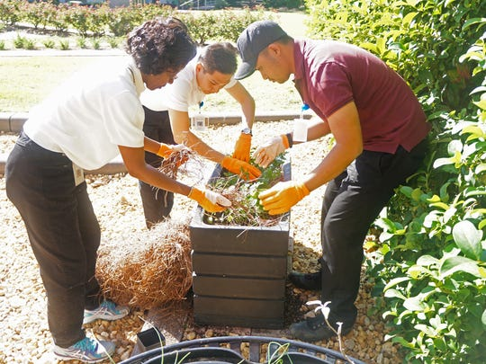 The visiting Fellows assisted in the City Hall herb garden with Angie Whitaker.