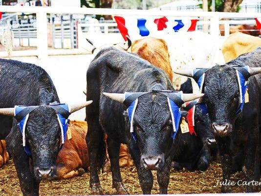 Roping steers