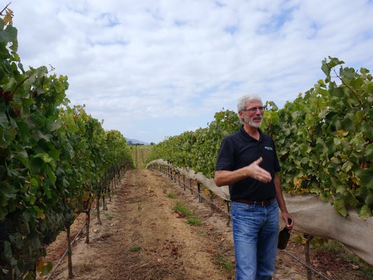 Winemaker Steve McIntyre