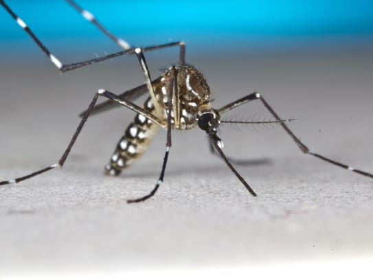Aedes Aegypti is the scientific name for the species