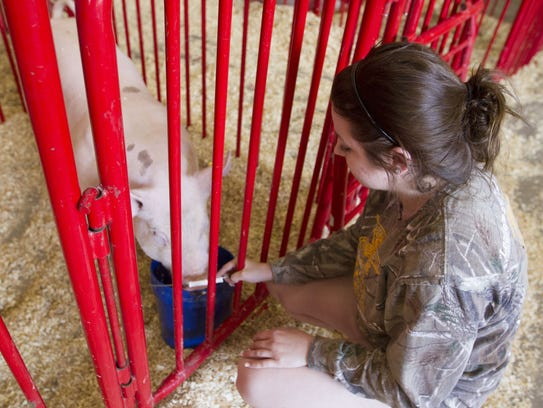Megan Rizzo, 16 of Goodyear waters the pigs during