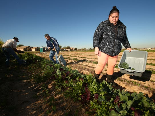 """Silvia Lopez harvests vegetables grown at """"Spaces of"""