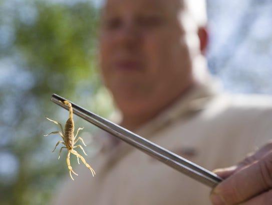 Ken Morgan, Collection Manager Reptiles at Phoenix