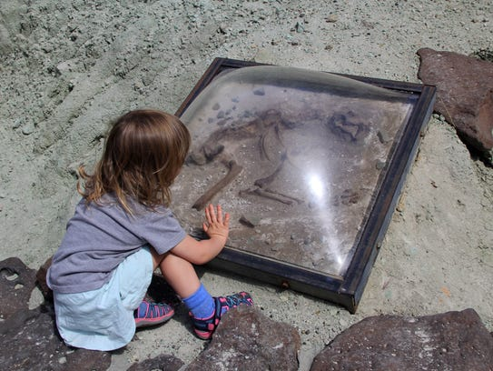 Lucy Urness, 2, inspects replica fossil bones on the