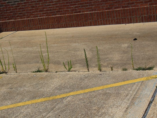 Grass growing out of the concrete at the old Rite Aid