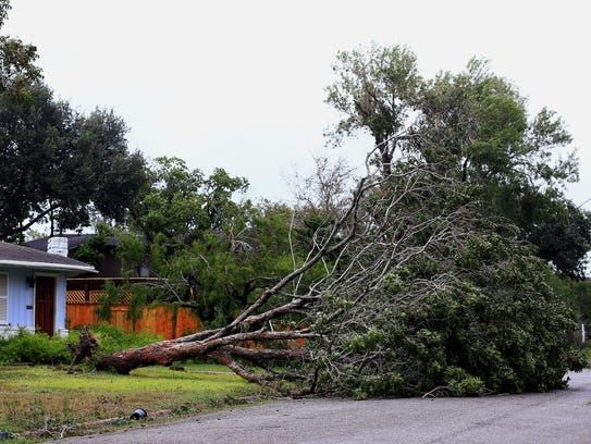 A tree lays on the ground after it was knocked down