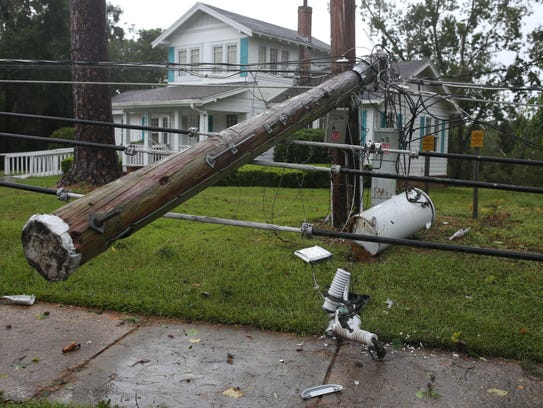 A power pole brought down by a pine tree that fell