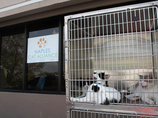 Cats rest outside at the Naples Cat Alliance in Golden