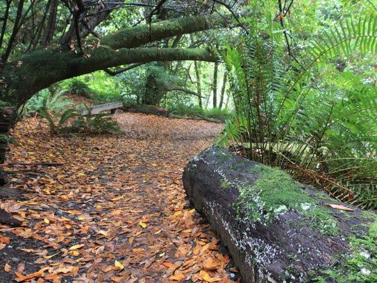 Myrtle Tree Trail in southwest Oregon.