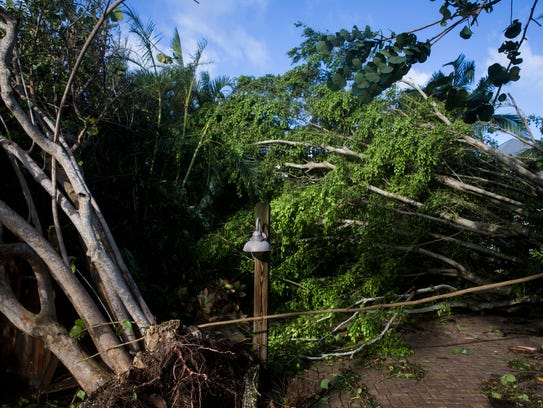 Trees and limbs that were brought down by Hurricane