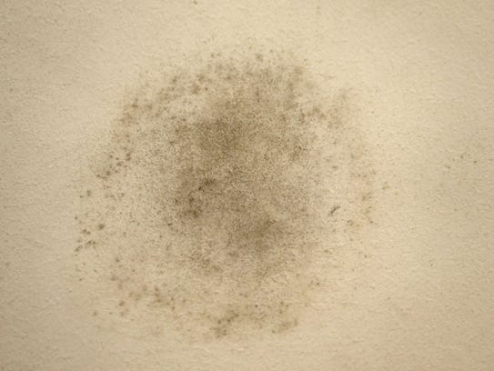 Mold on the walls of home of  retired Keyport teacher
