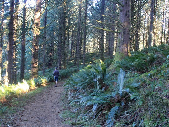 A forested user trail leads to God's Thumb in Lincoln