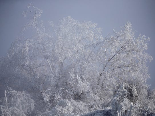 Ice clings to tree branches near High Falls as temperatures