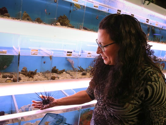 Milly Smith checks on a long spiny sea urchin in one of her dozens of salt water tanks.